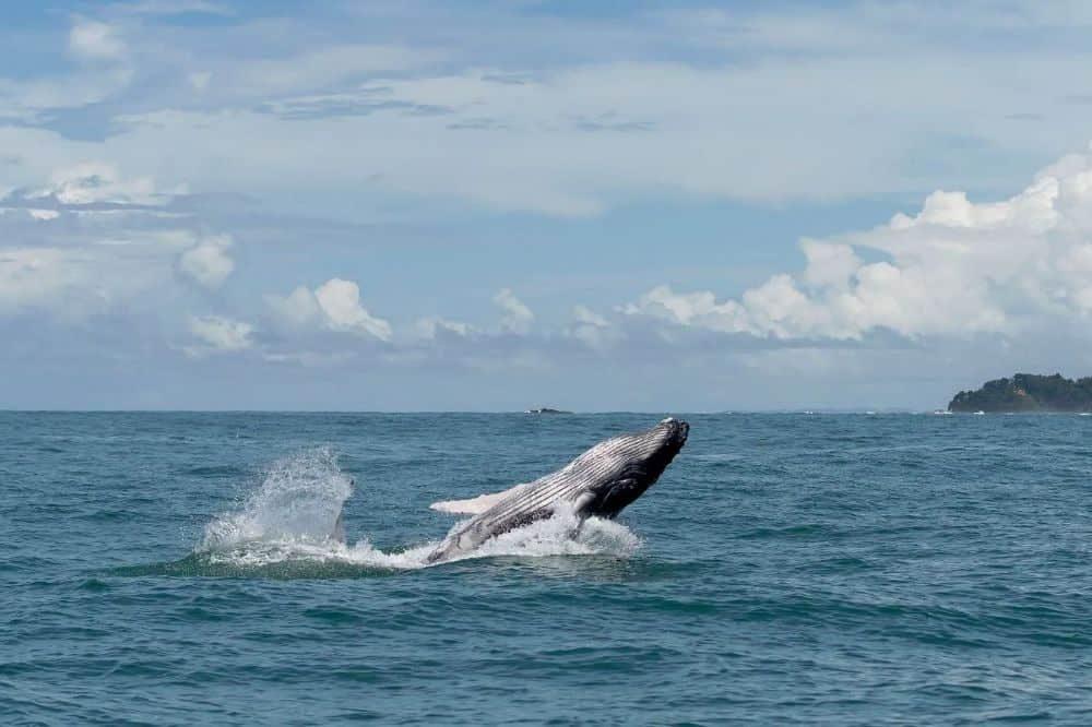 luxe reis panama walvis