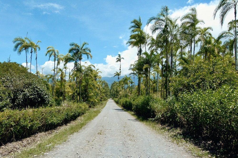palmbomen autorijden costa rica