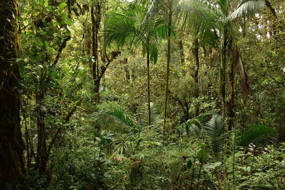 regenwoud jungle regenseizoen costa rica