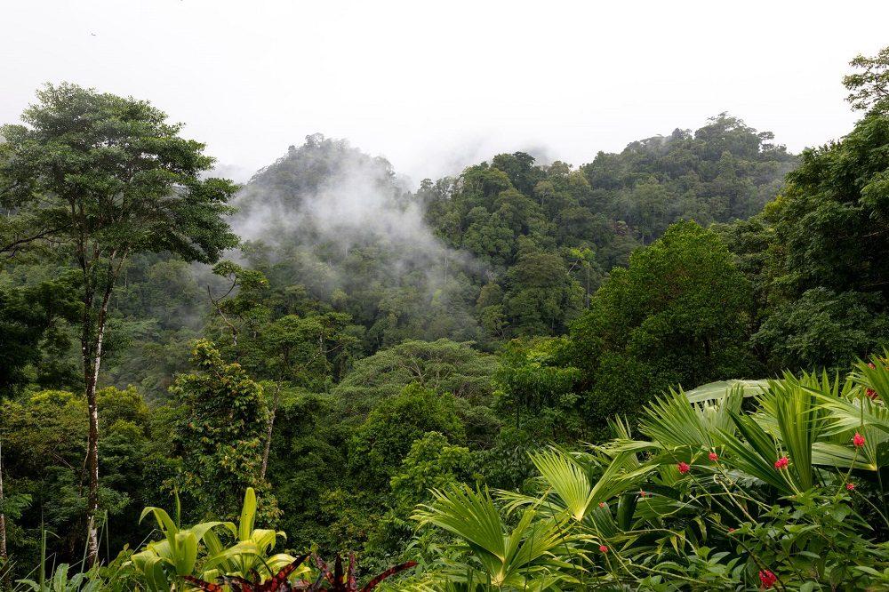 regenwoud nationaal park corcovado