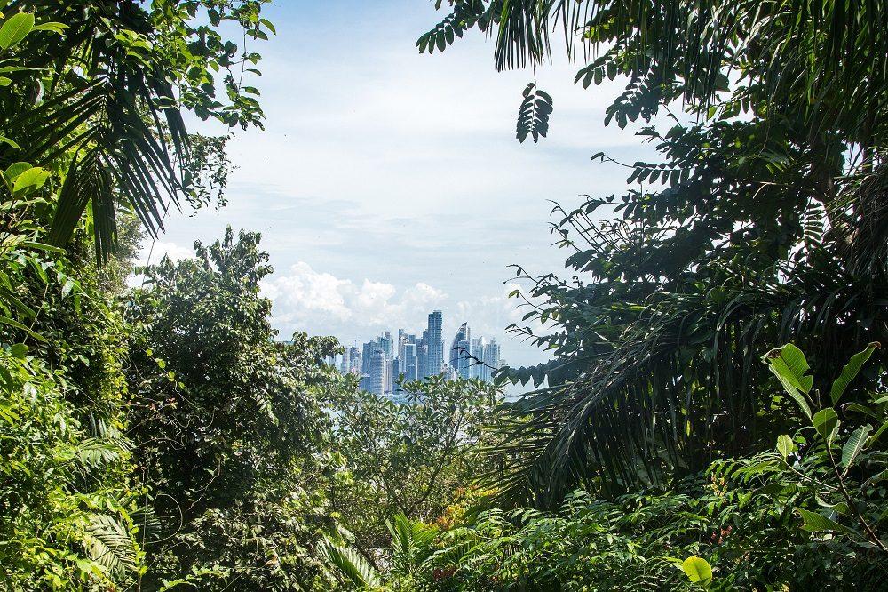 regenwoud panama stad