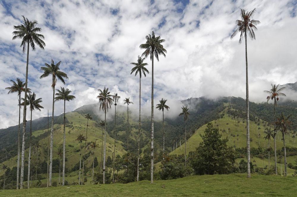 rondreis colombia valle de cocora