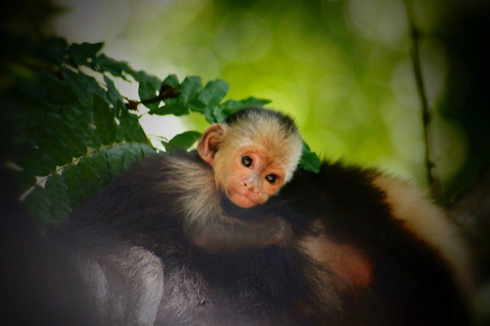 rondreis honduras aap