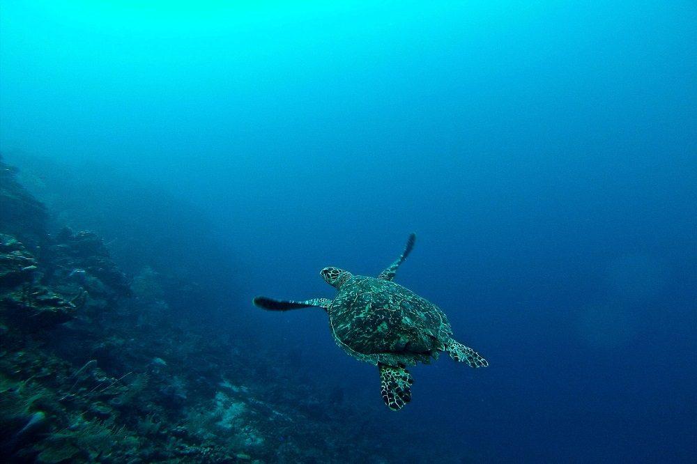 schildpad rondreis honduras