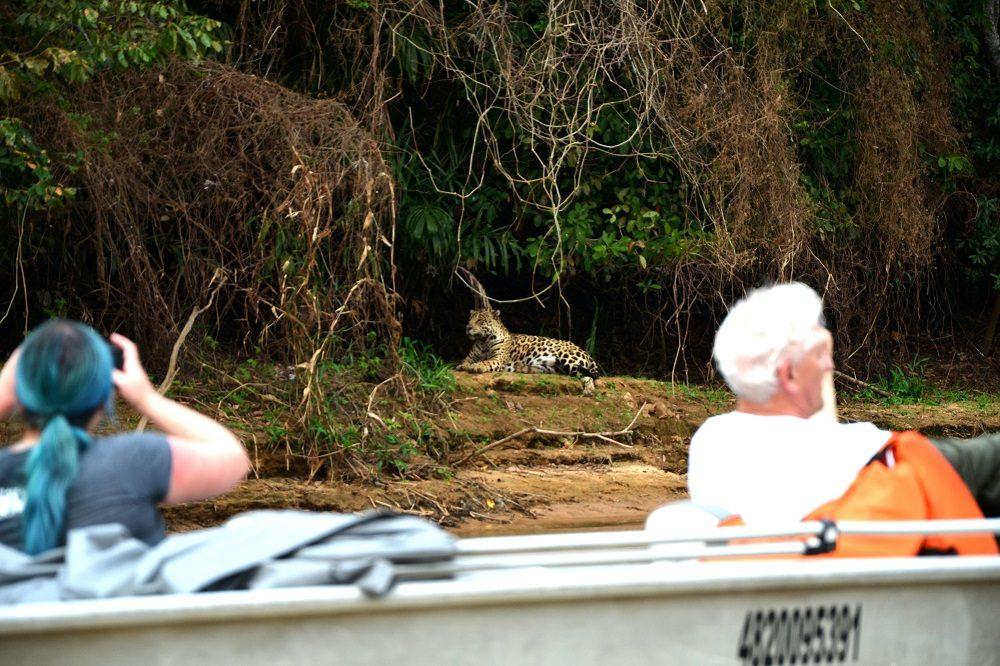 spotten naar de jaguar