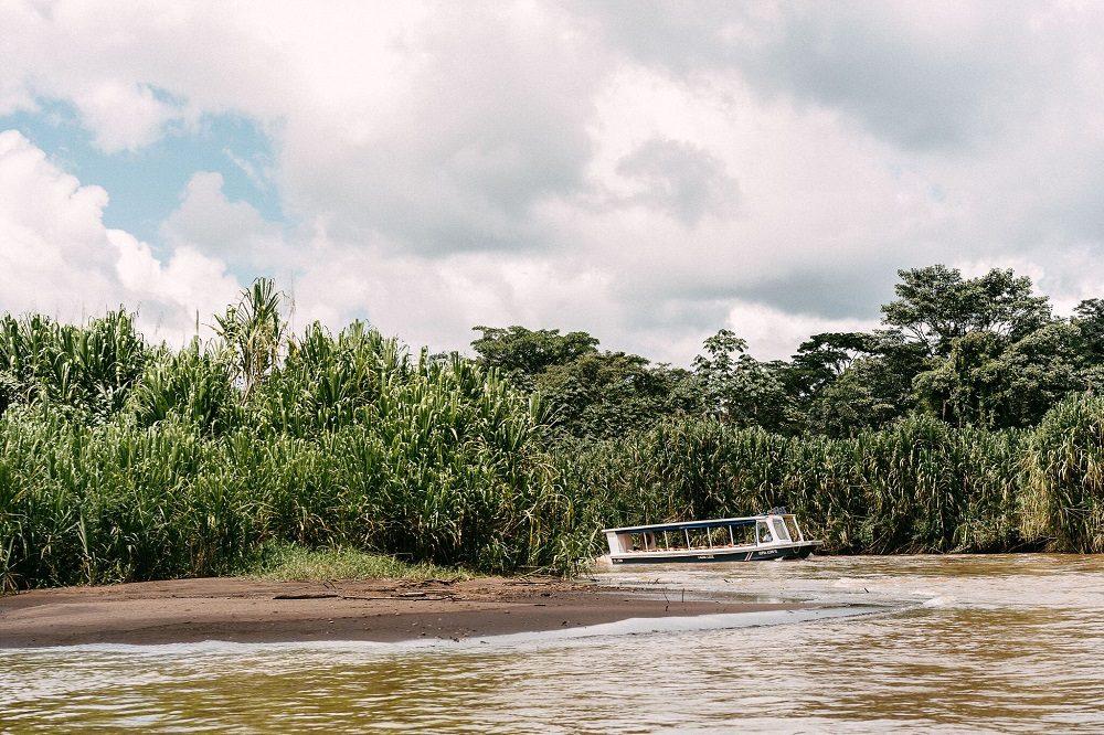 tortuguero regenwoud