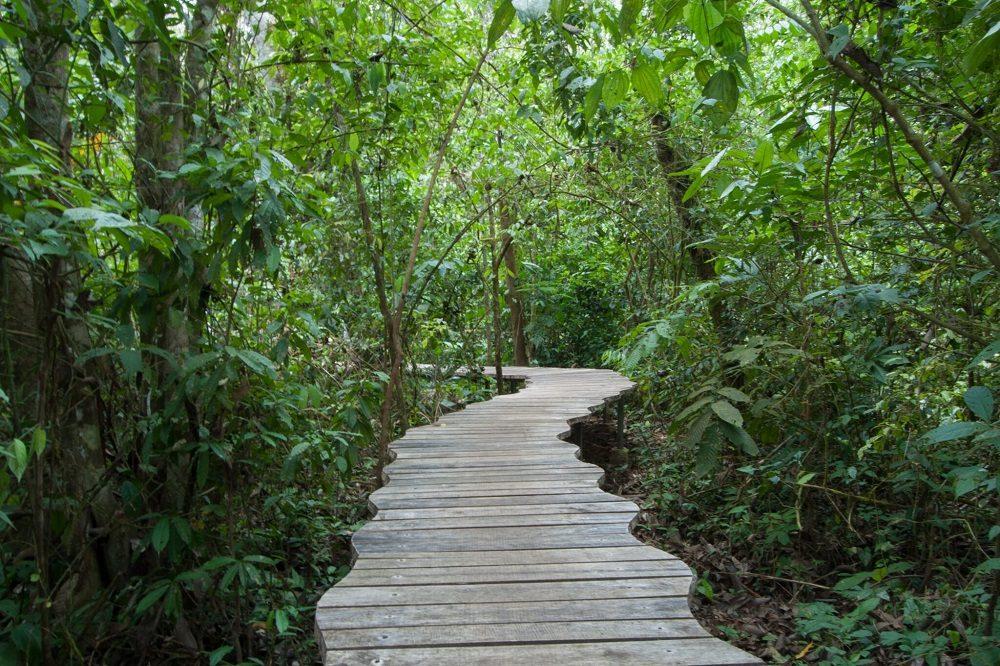 trail corcovado
