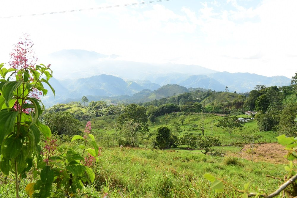 uitzicht groene natuur costa rica