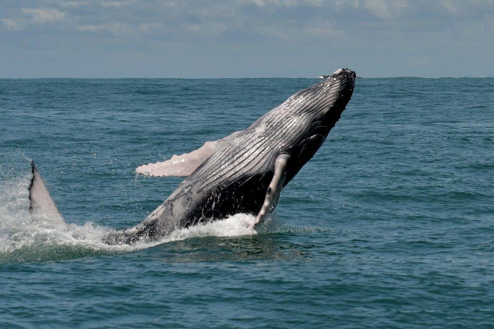 walvis costa rica fotocedits ruud swinkels