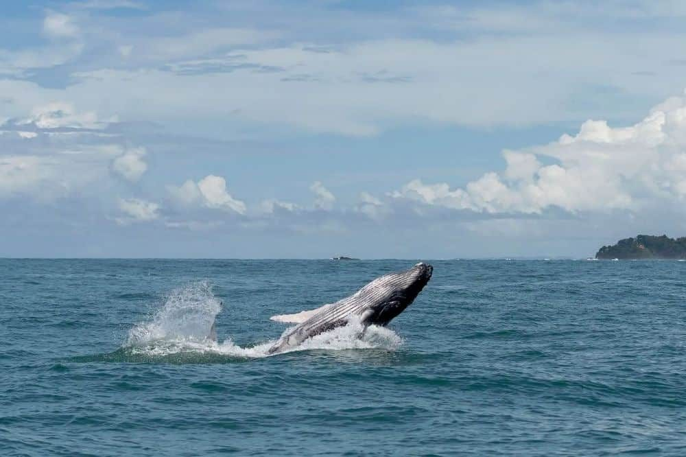 walvis rondreis colombia