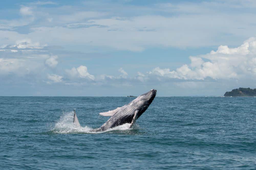 walvis rondreis costa rica