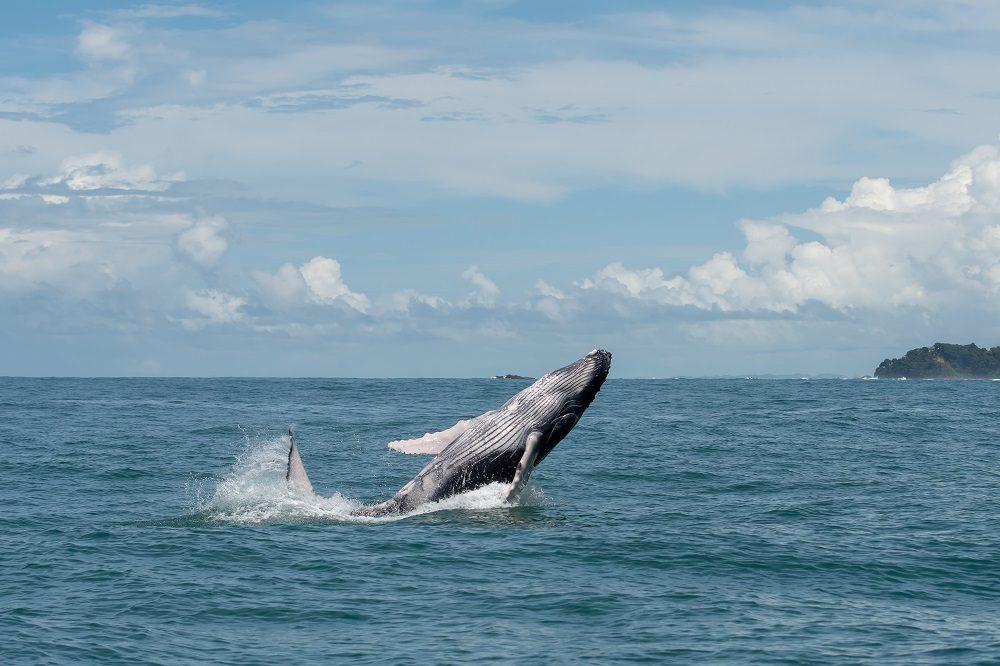 walvis uvita fotografiereis