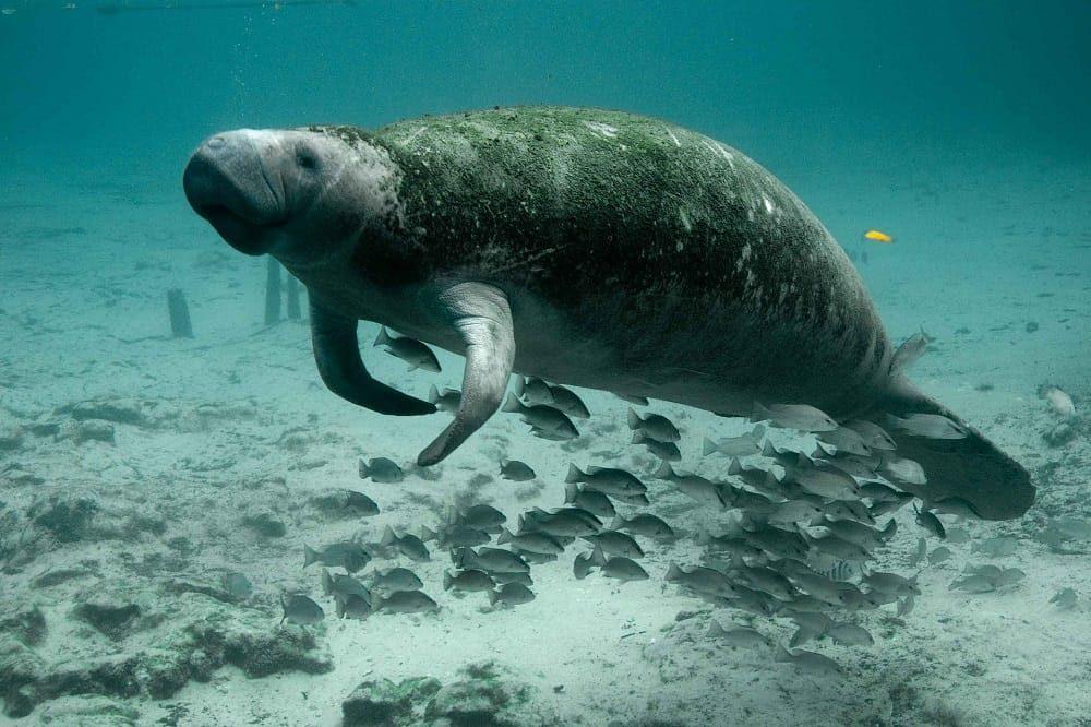 zeekoe duiken belize