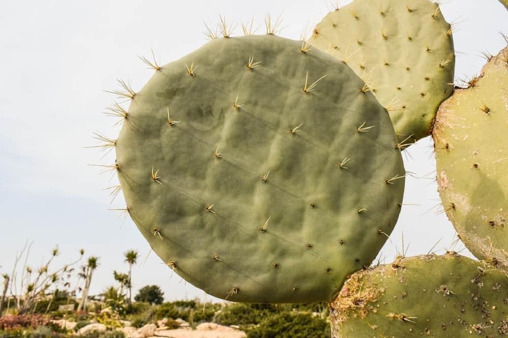 cactus eten Mexico