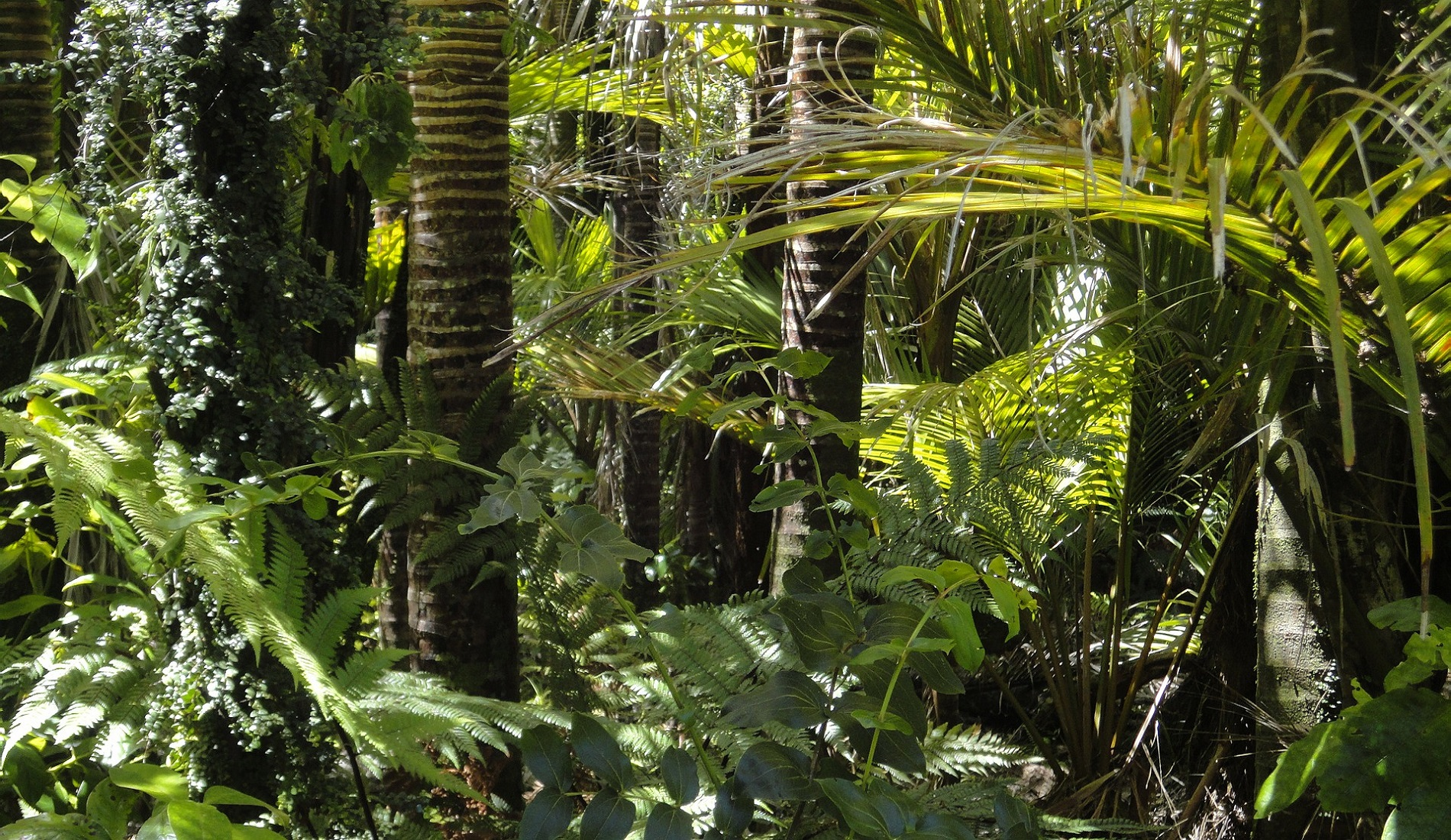colombia amazone regenwoud