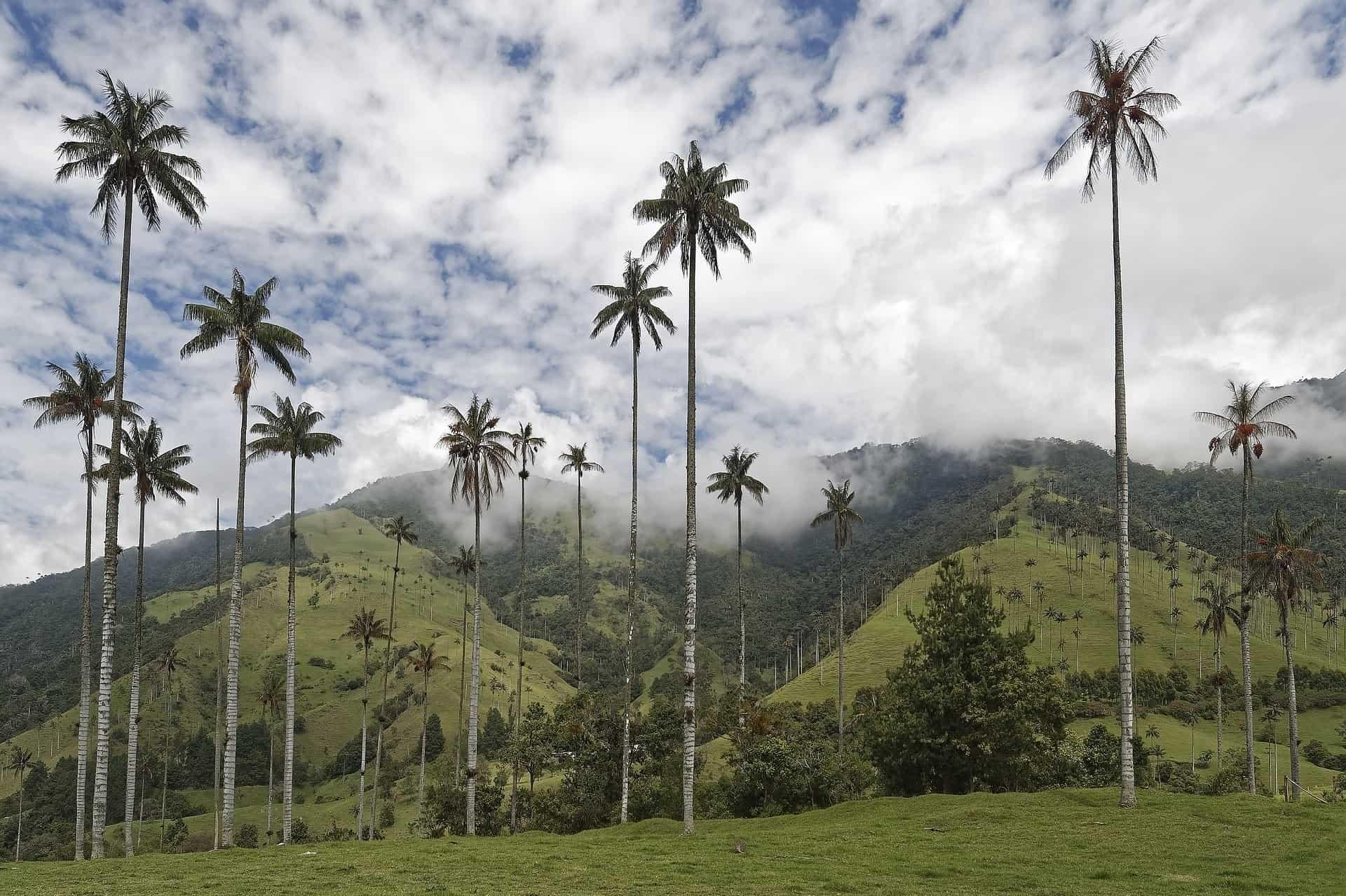 colombia reizen valle de cocora