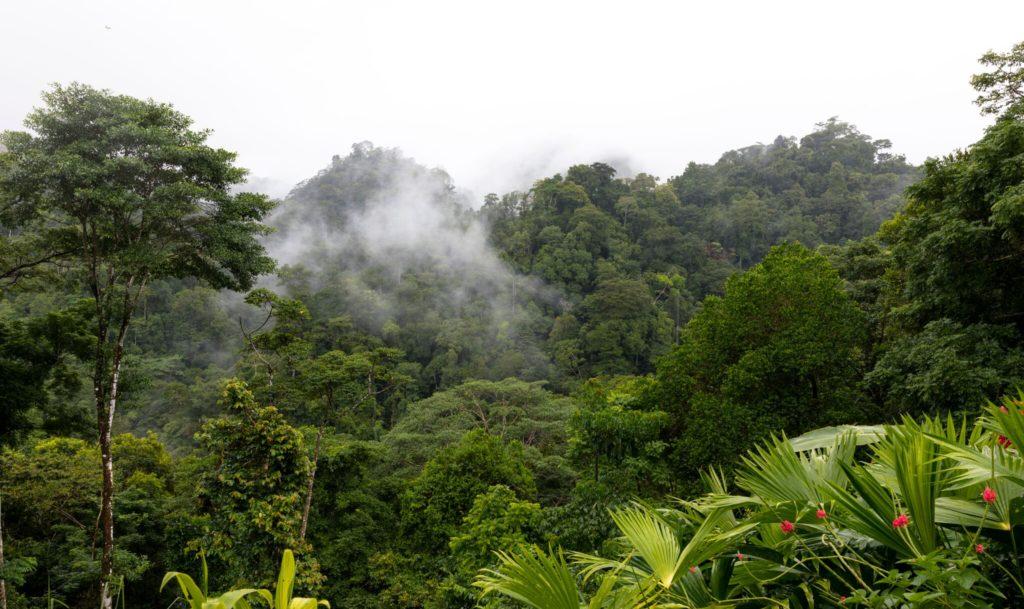 costa rica ongerept regenwoud