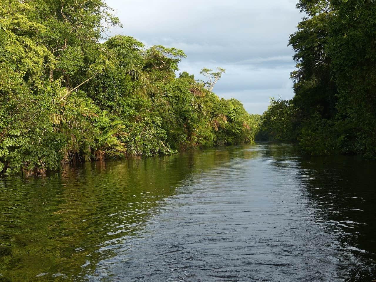 costa rica reizen regenwoud