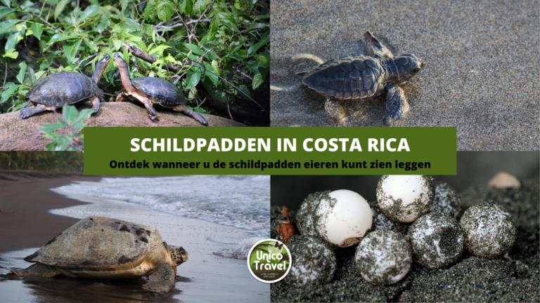 costa rica schildpadden