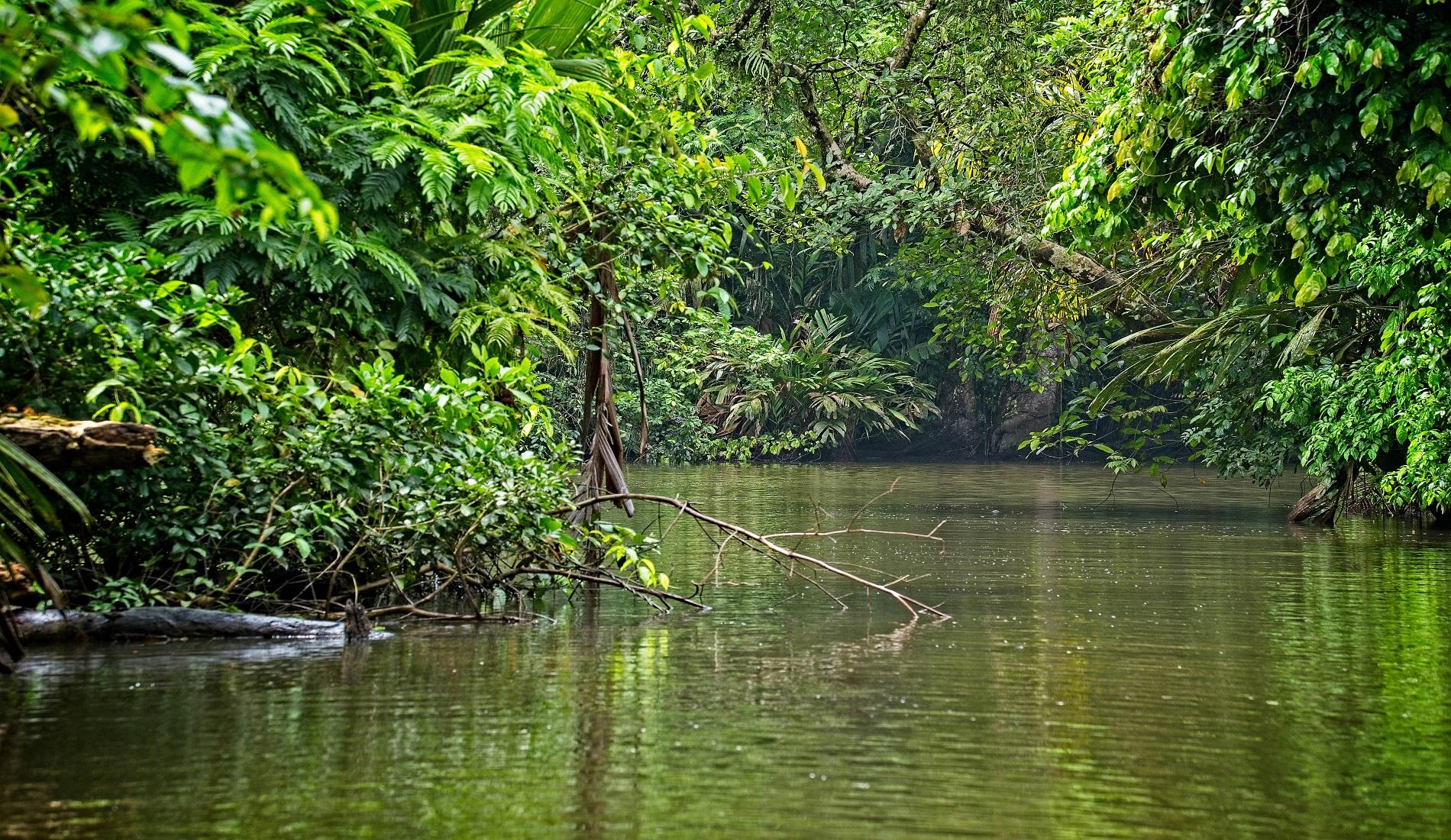 costa rica september regenwoud