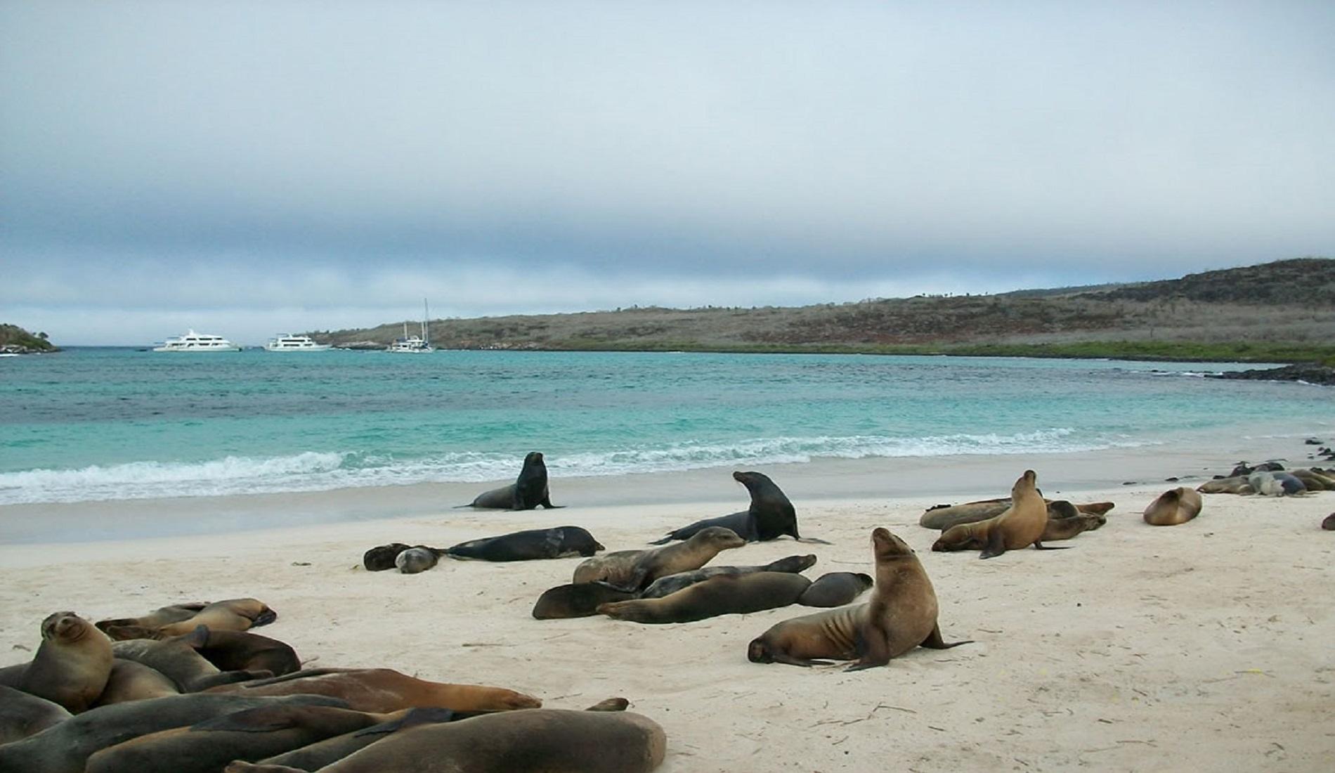 duikcruise galapagos eilanden lobos island