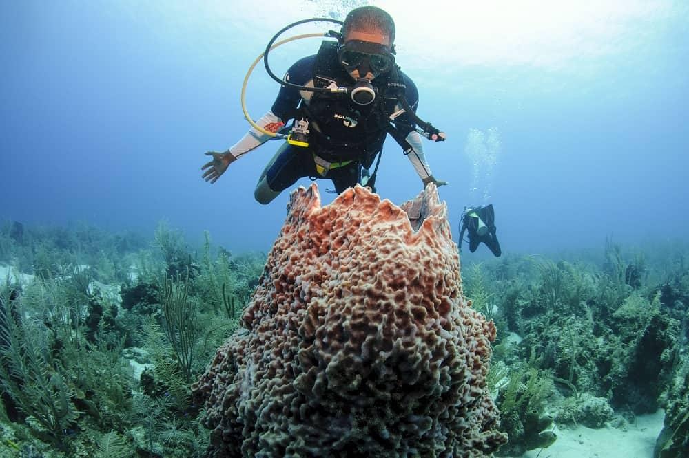 duiken belize