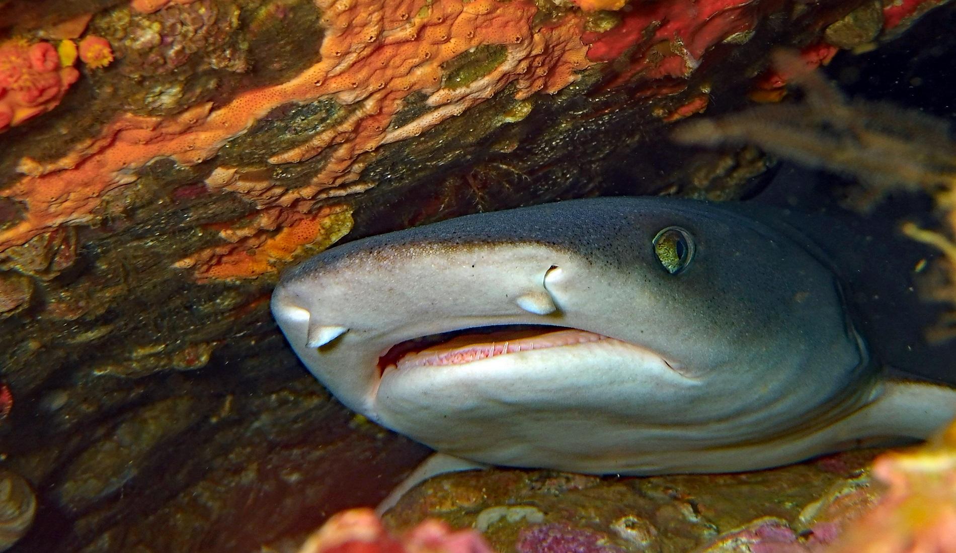 duiken costa rica haai