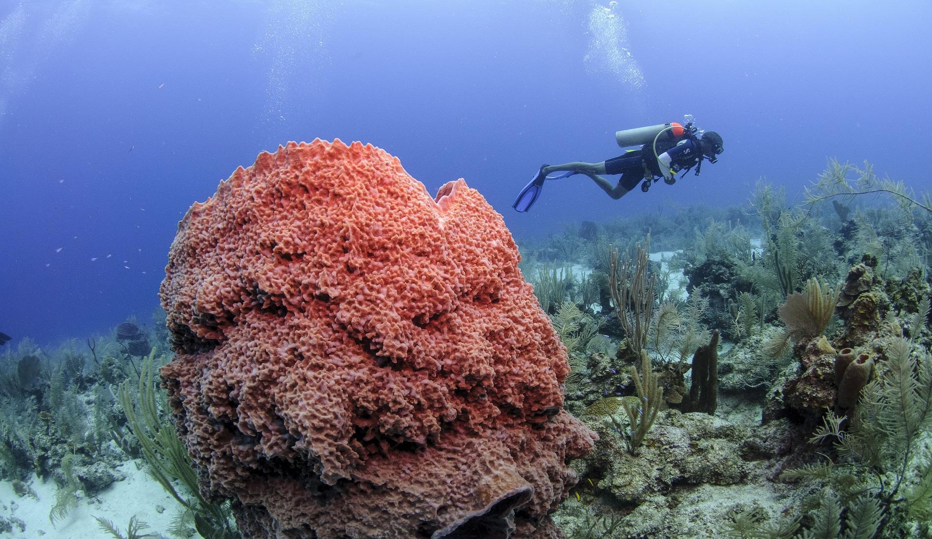 duiken koraal duikreis belize