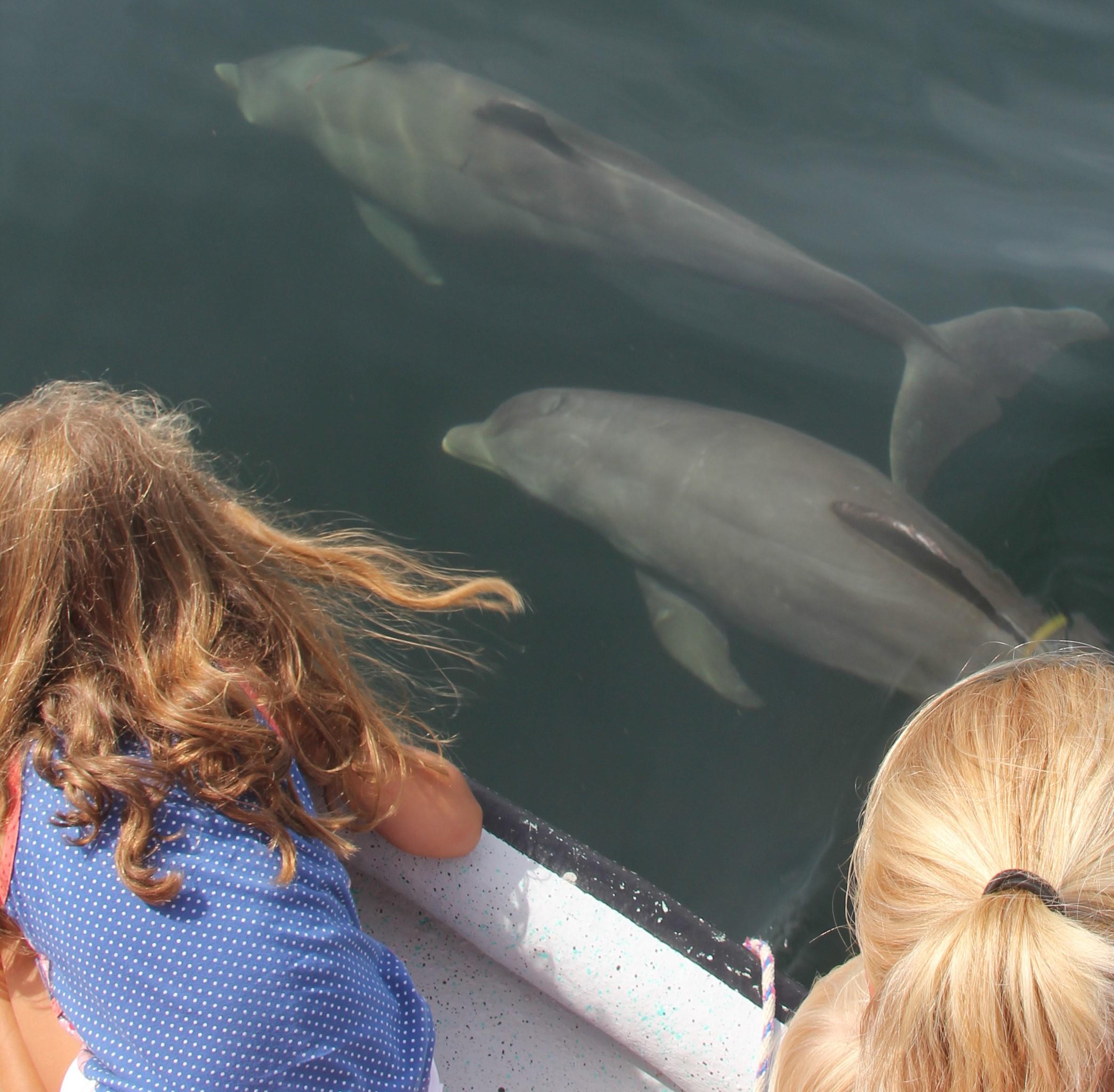 duikreis panama dolfijnen