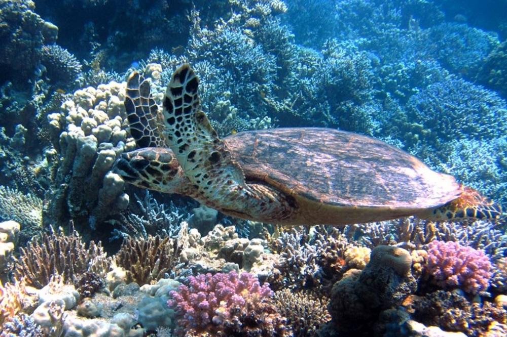 duikreis panama schildpad