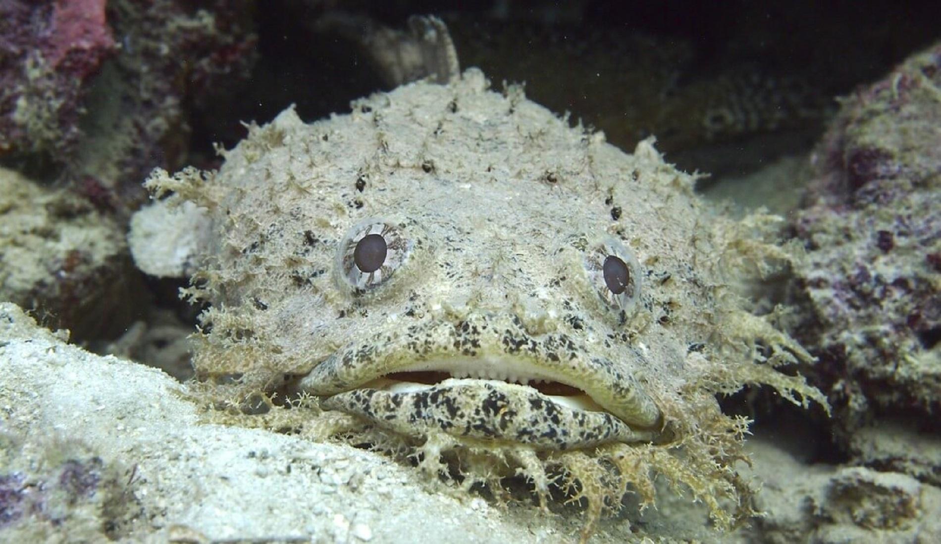 duikreis panama vis