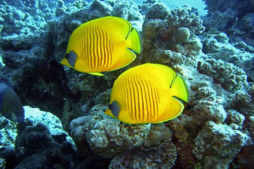 duikreis panama vissen