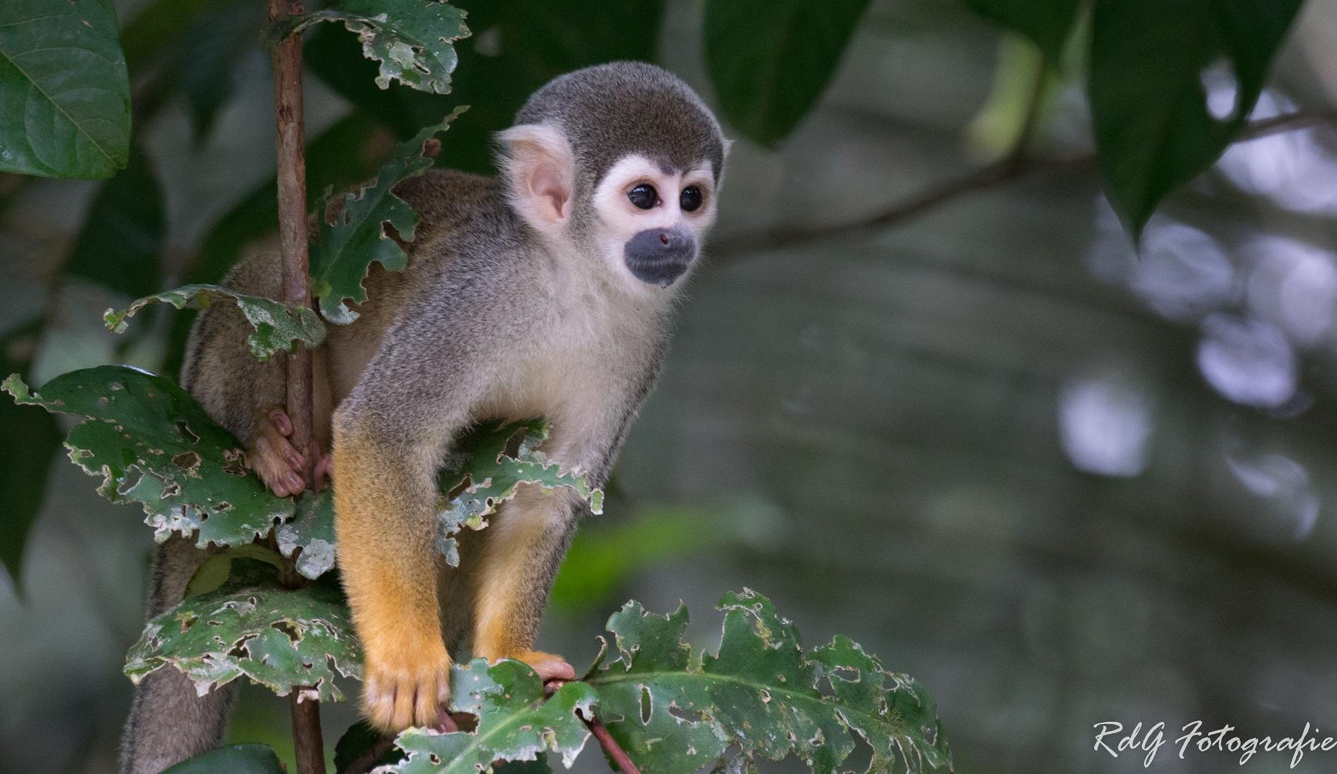 ecuador hoogtepunten amazone aap
