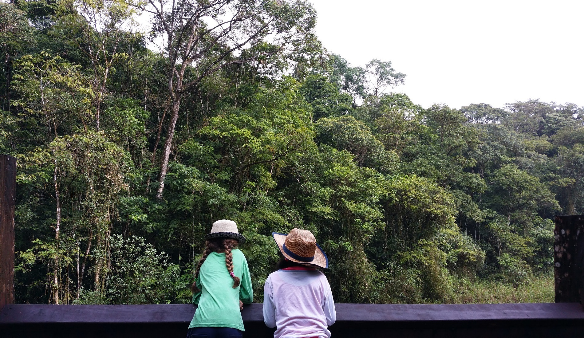familiereis costa rica regenwoud uitzicht
