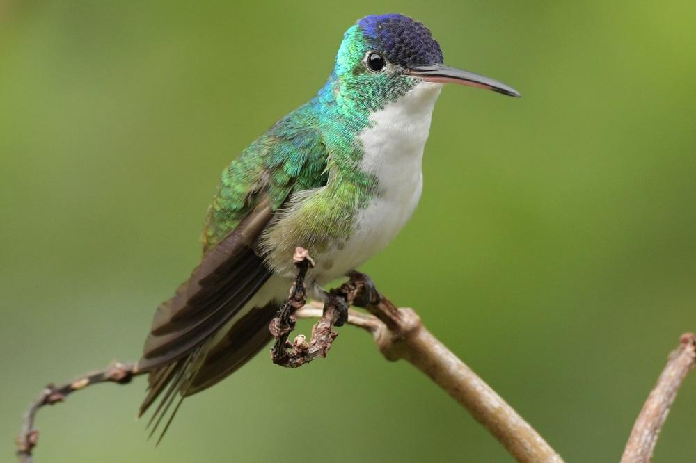 fotoreis colombia kolibrie