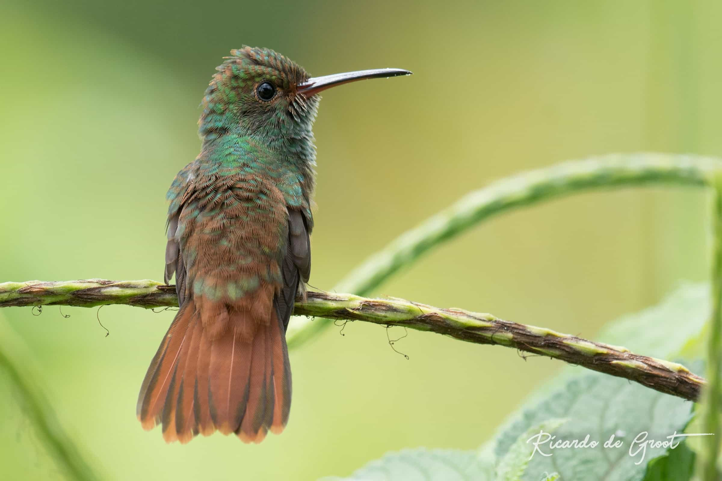 fotoreis costa rica vogel