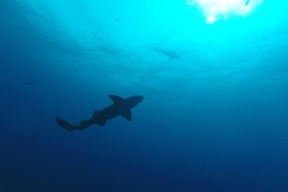 haai belize