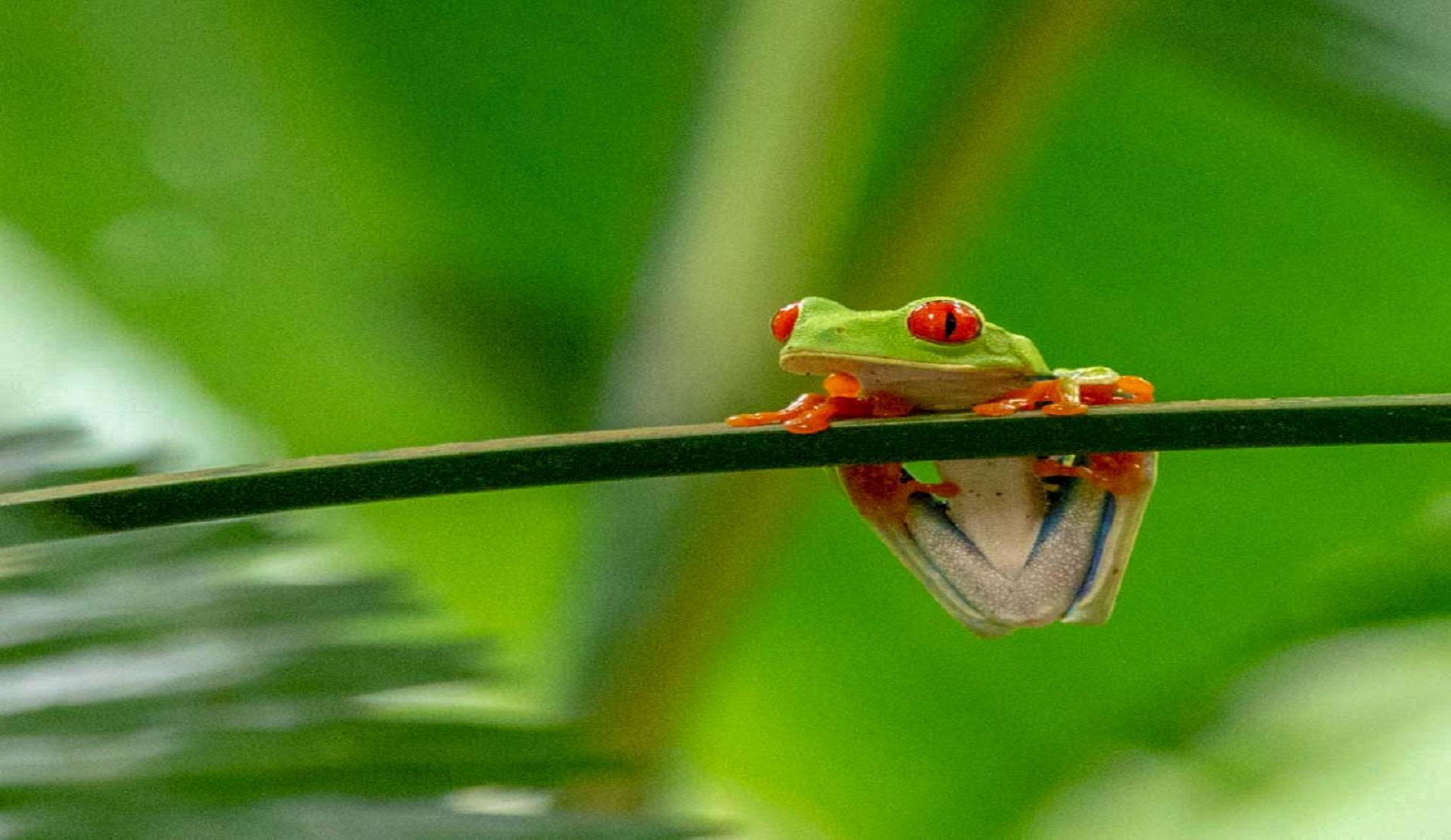 kikker regenwoud