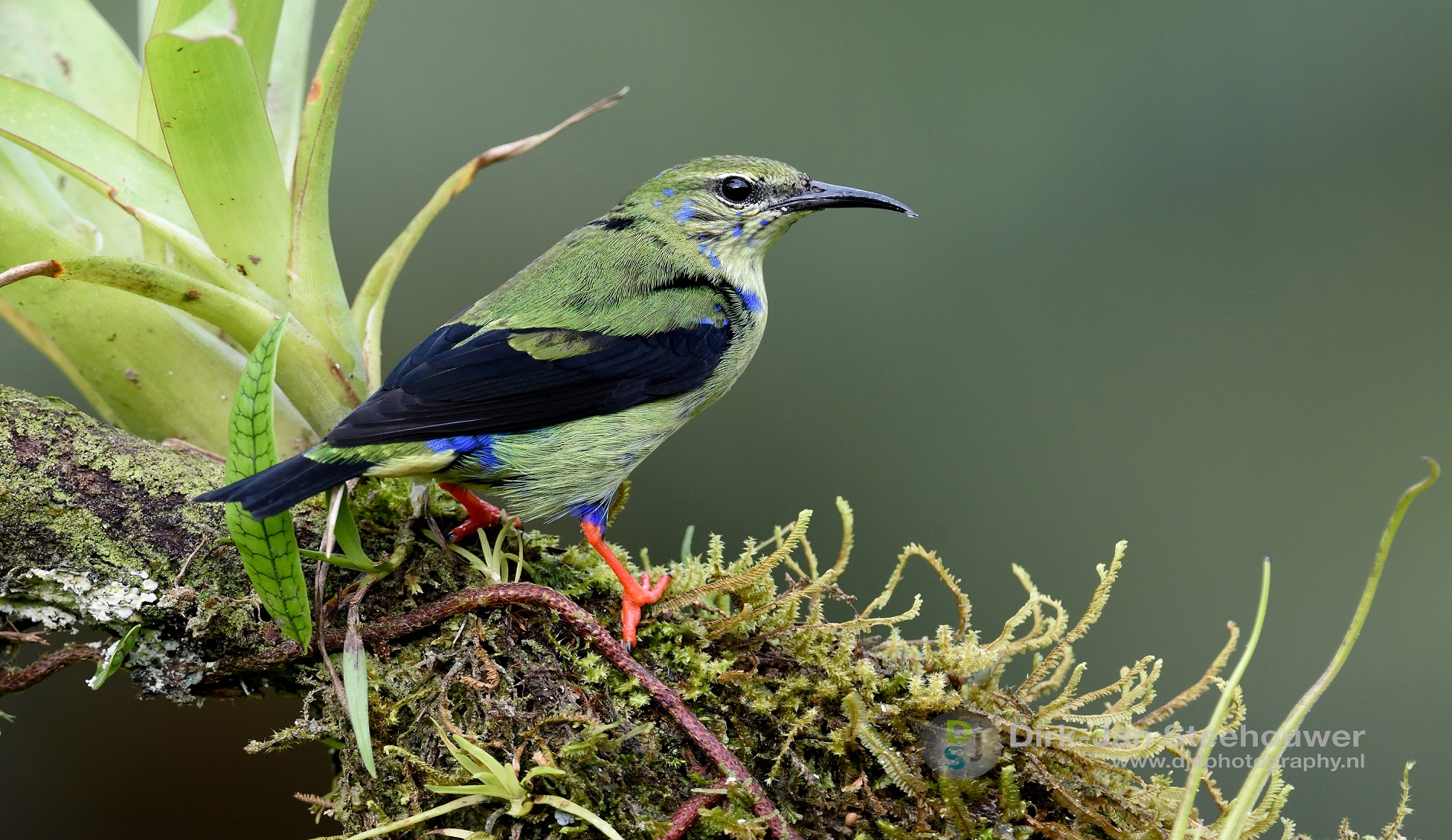 kleurrijke vogel costa rica