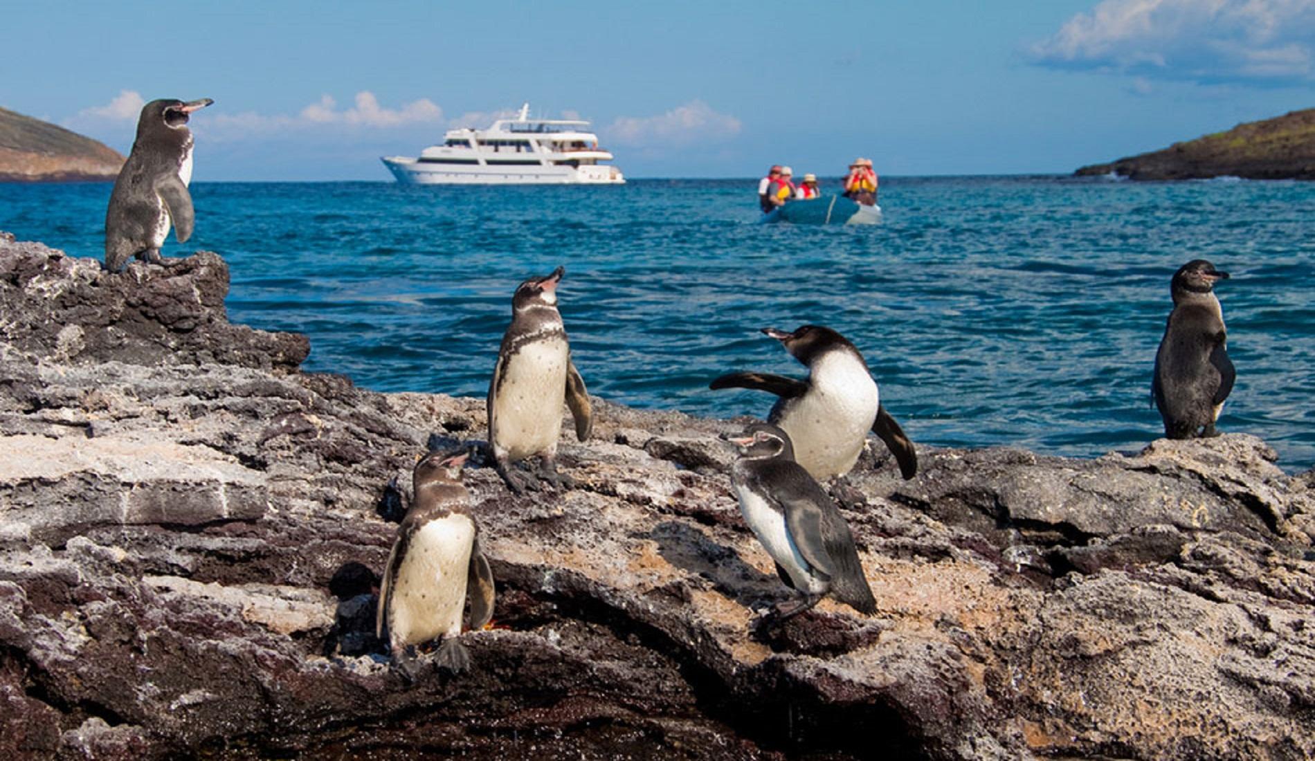 luxe reis ecuador penguins galapagos