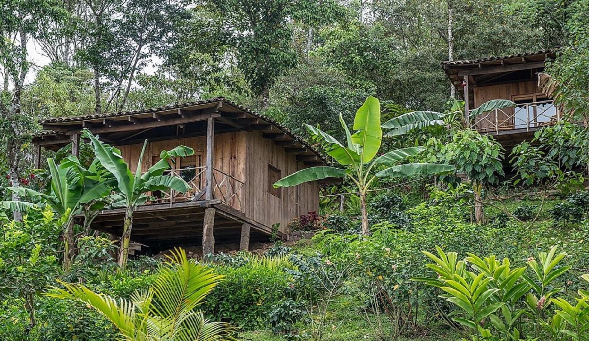 matagalpa nevelwoud rondreis nicaragua