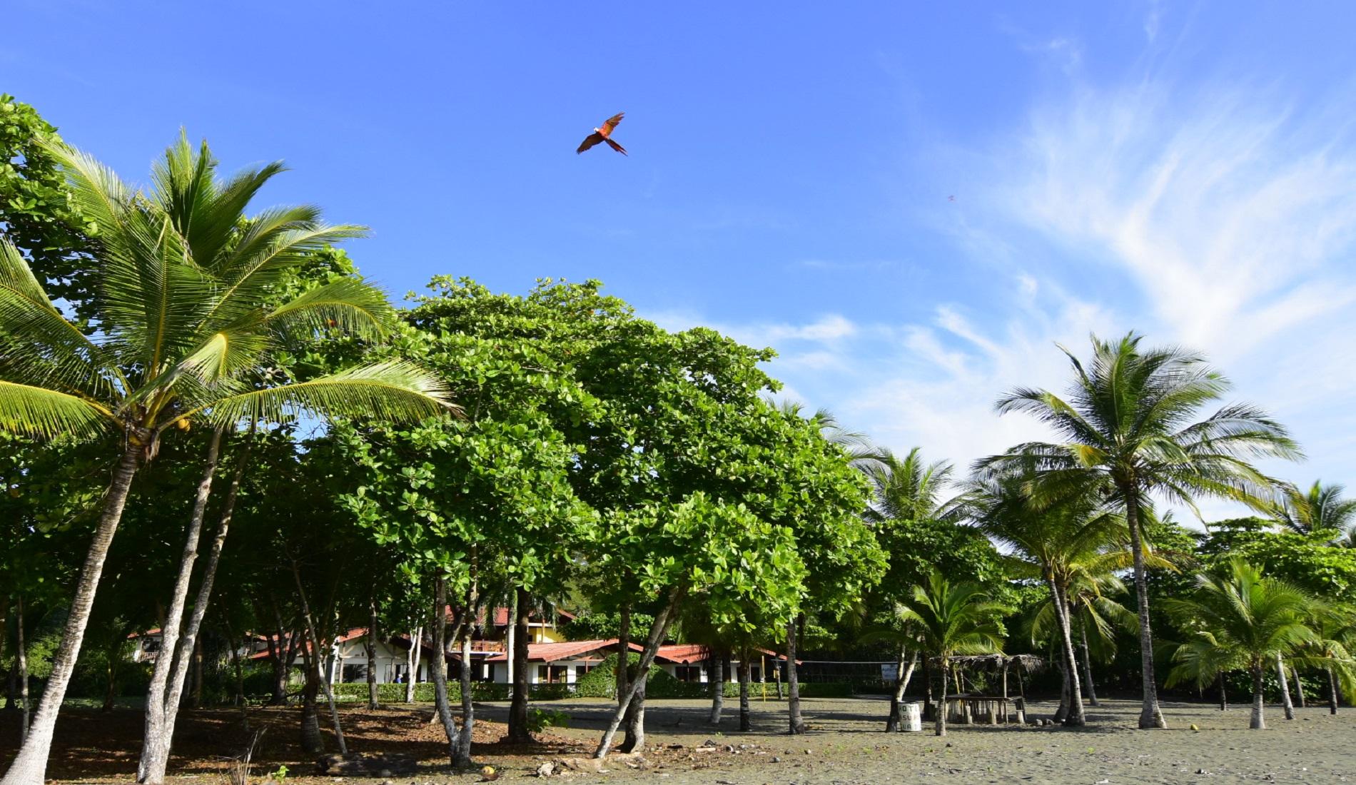 mooiste stranden costa rica playa platanares