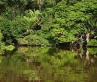 Nationaal Park Tortuguero