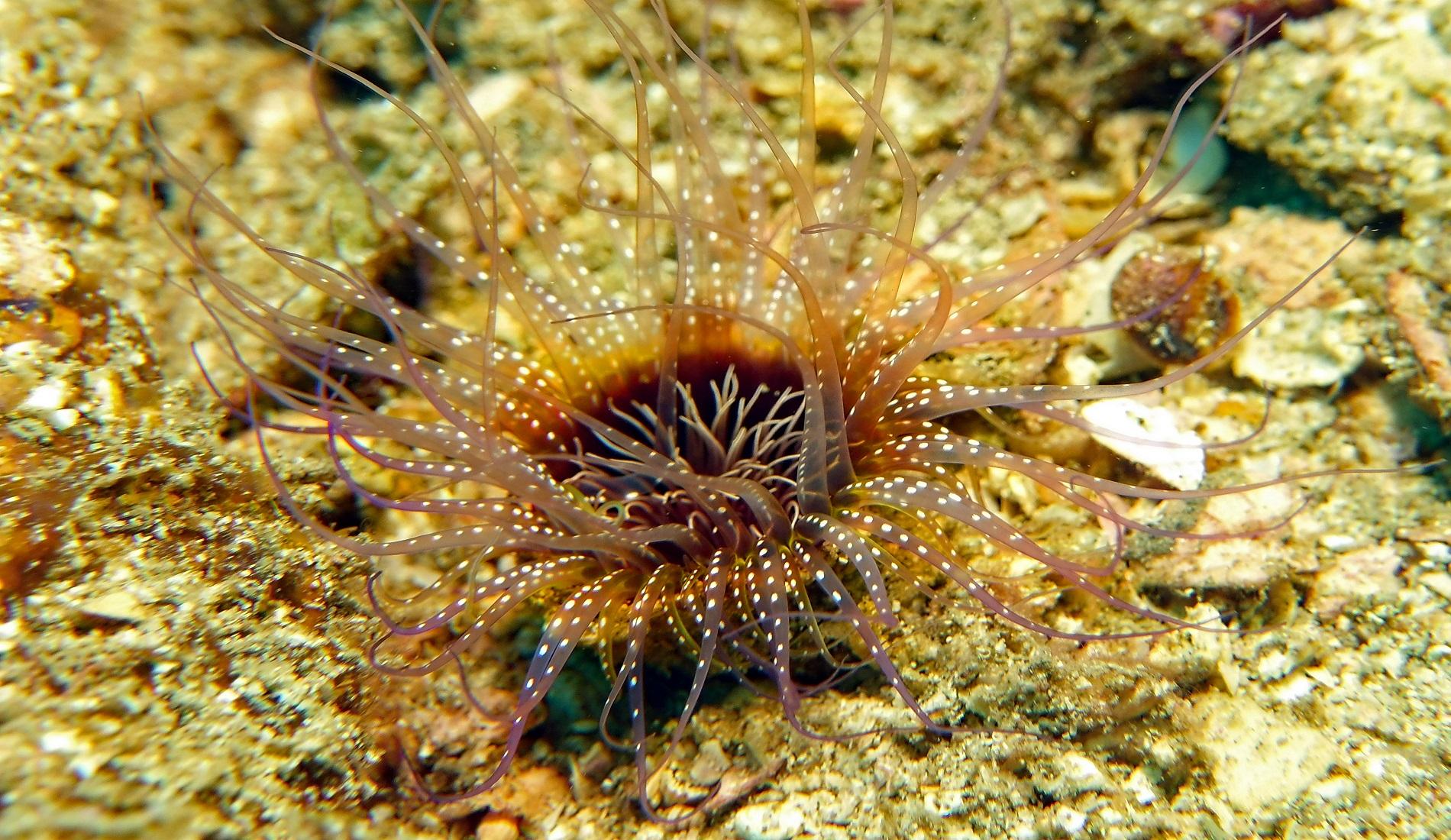 onderwaterwereld costa rica