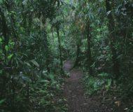 Ongerepte regenwouden