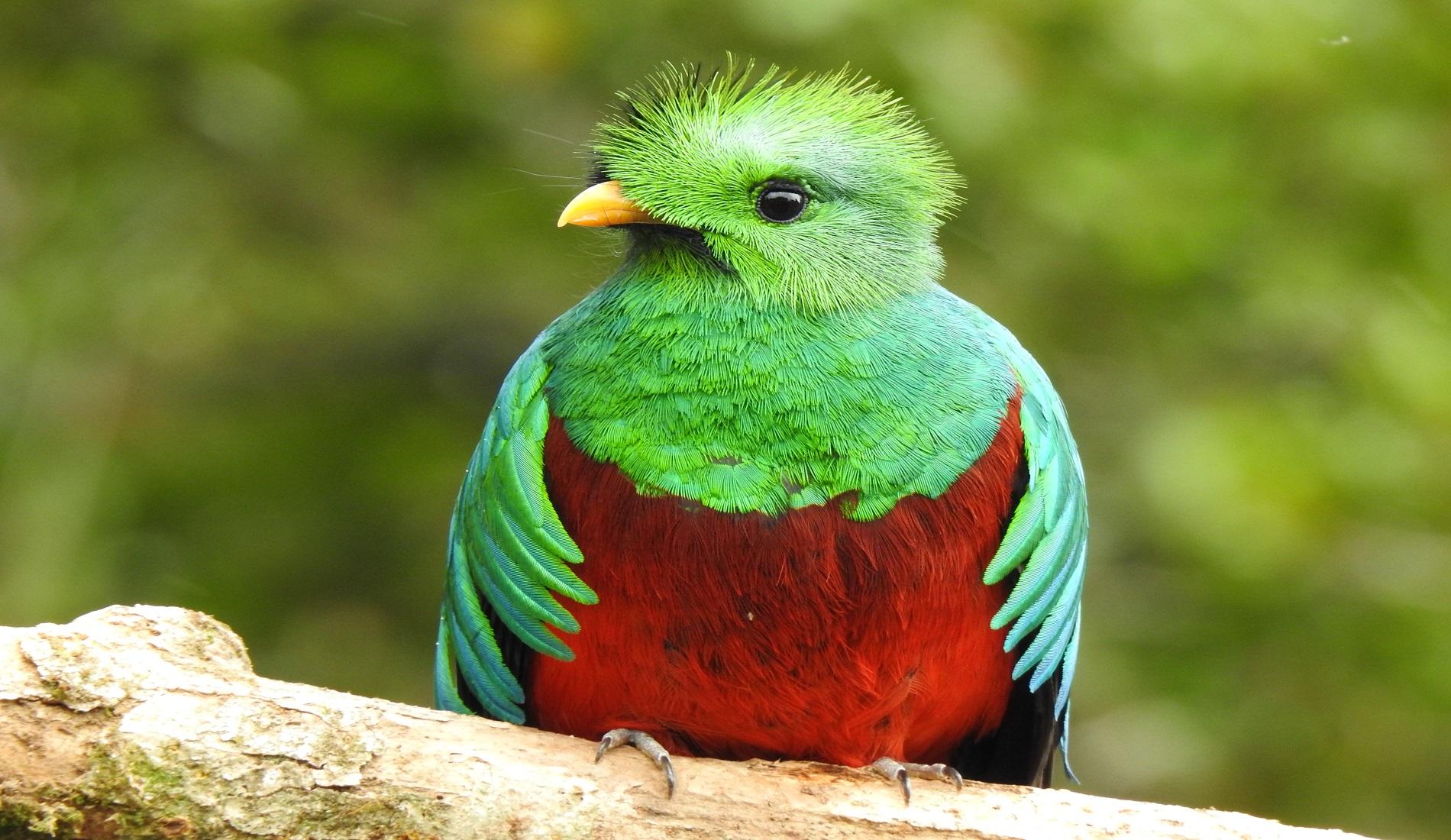 quetzal costa rica