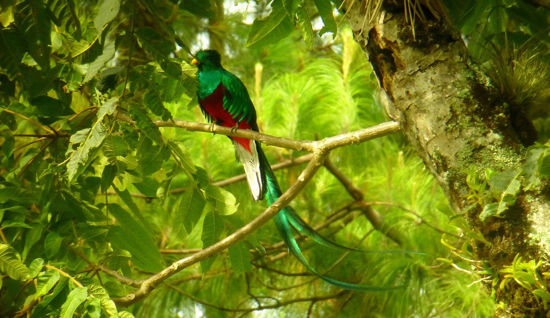 quetzal mount totumas vogelreis panama