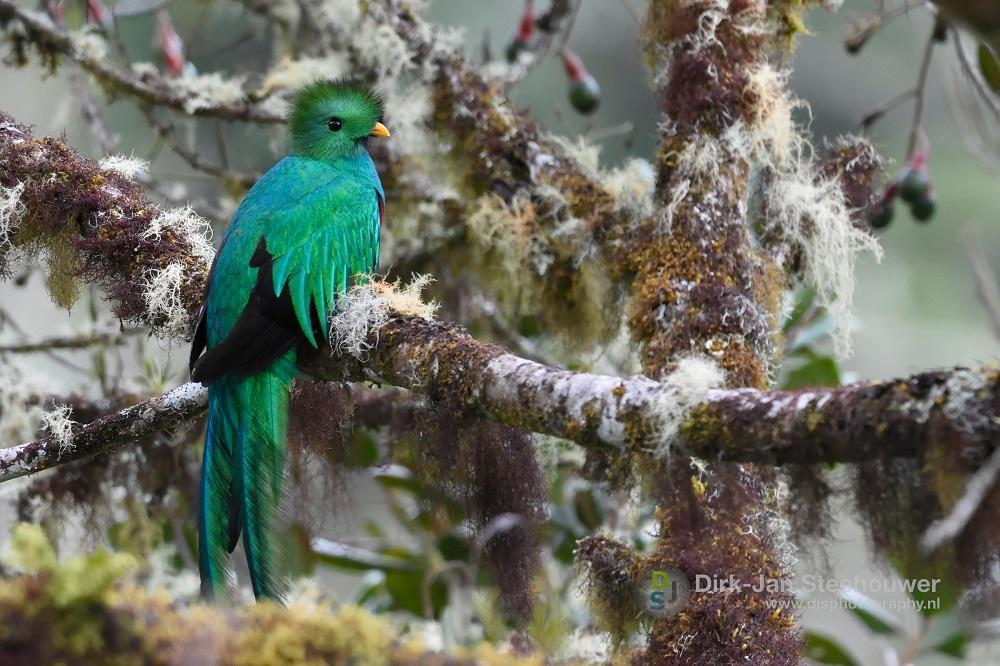 quetzal san gerardo de dota