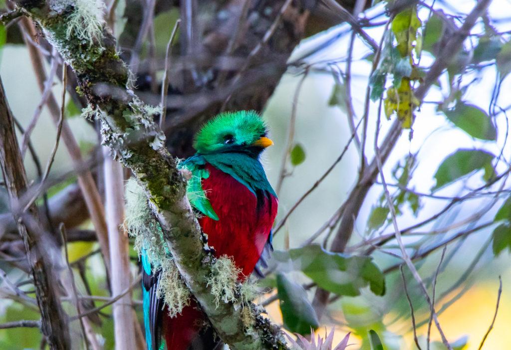 quetzal vogelreis costa rica