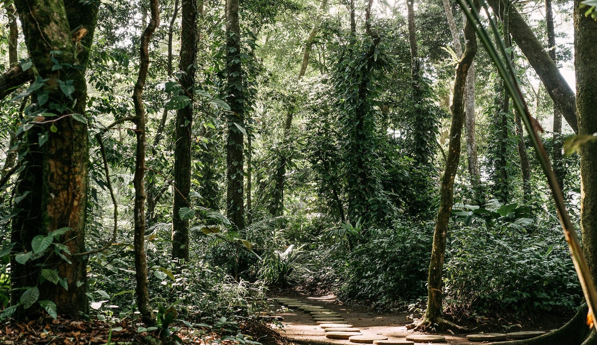 regenwoud tortuguero